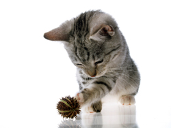 Ear Mites and Your Cat